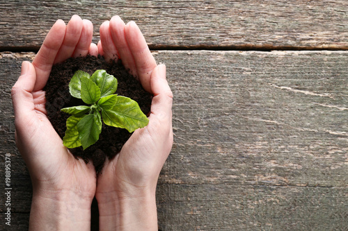 Female hands holding young plant on wooden table