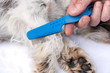 Leinwanddruck Bild - Dog examine for fleas with the flea comb - grooming