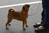 Dog on the dog show