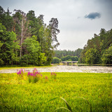 Beautiful landscape with wild flowers near forest lake - 198925514