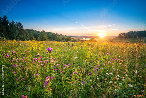 Plexiglas Zomer Beautiful sunset over wild flowers in a countryside