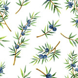 Watercolor seamless pattern of plants juniper isolated on white background. - 198931931