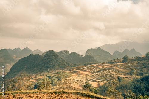 Fotobehang Beige rice paddys fill this Vietnam scene