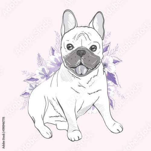 Foto op Plexiglas Franse bulldog French bulldog, sitting in front of white background