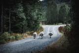 Gang of three sheeps - 198958971