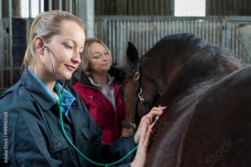 obraz PCV Female Vet Giving Medical Exam To Horse In Stable