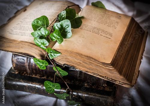 Foto Murales libros y hojas