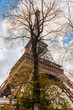 Eiffel tower between branches and arveres