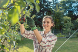 Woman in garden outdoors checking fruit tree  - 198988315