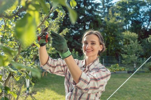 Foto Murales Woman in garden outdoors checking fruit tree