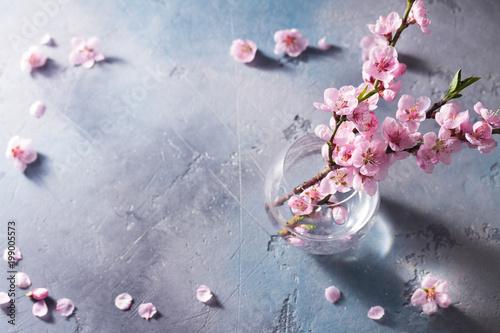 Foto Spatwand Kersen pink cherry blossom