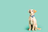 Adorable golden puppy