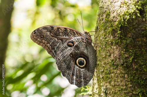 Foto Murales Butterfly_c