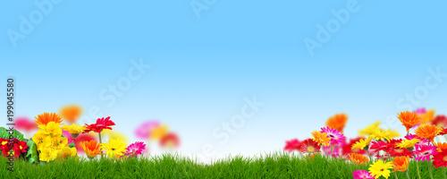 Foto Murales Hintergrund Text Frühling Sommer Blumen