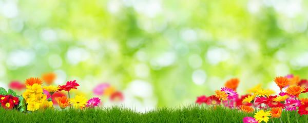 Frühling Hintergrund Blumen © drubig-photo