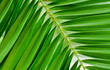 tropical green leaf, leaves, green tropical background, vacation or minimal concept style