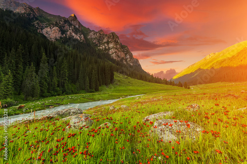 Fotobehang Baksteen Blooming valley at sunset in the mountains