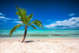 Palmtree and tropical island beach and speed boats in Caribbean sea.
