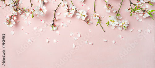 Leinwandbild Motiv Spring floral background, texture, wallpaper. Flat-lay of white almond blossom flowers and petals over pink background, top view, copy space, wide composition. Womens day holiday greeting card