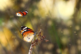 Butterfly's community   - Stock Image