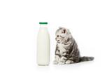 cute little kitten looking at bottle of milk isolated on white