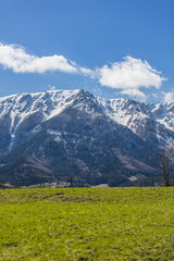Idyllic landscape in the Alps with fresh green meadows and blooming flowers and snowcapped mountain tops in the background,