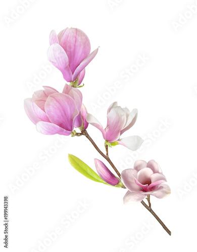magnolia branch - 199143398