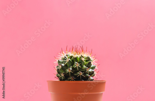 Green Cactus in Pot on Pink Pastel Color Background. Minimal Concept. Flat Lay. Top View. - 199147745