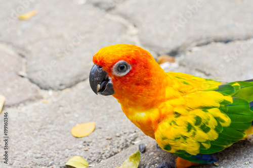 Fotobehang Papegaai The bird parrot beautiful in the zoo
