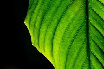 Tropical plant leaf close up