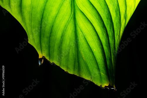 Liści roślin tropikalnych z bliska
