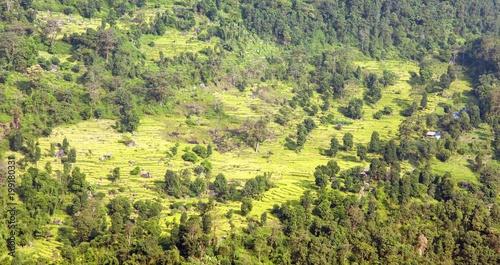 Aluminium Rijstvelden golden terraced rice or paddy field in Nepal