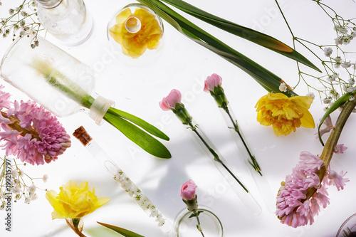 świeże wiosenne kwiaty