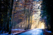 road at a forest - 199239921