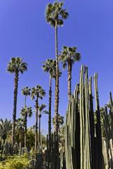Jardin Majorelle, botanischer Garten in Marrakesch, Marokko, Afrika