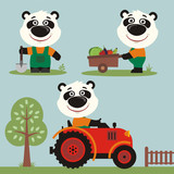 Fototapeta Set of funny panda bear farmer with shovel, with wheelbarrow with vegetables, in farm tractor. Collection of cartoon panda bear is working on the farm.