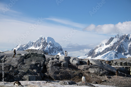 Fotobehang Pinguin Gentoo penguins on Petermann Island, Antarctica, with a backdrop of snowcapped mountains