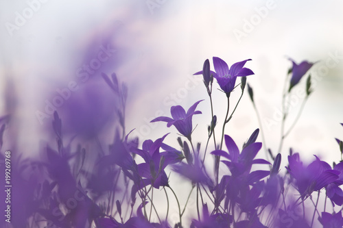 Canvas Snoeien wildflowers lilac bells. Nature spring