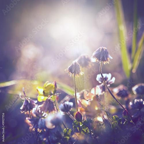 Poster Aubergine summer vintage beautiful flowers on sunrise