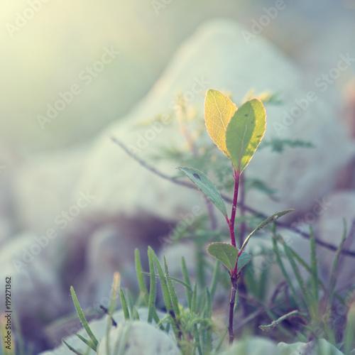 Fotobehang Lavendel summer vintage beautiful plant on sunrise