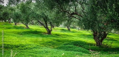 Drzewa z rzędu, Grecja