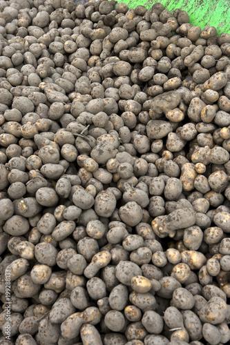 Fotobehang Stenen Potatoes