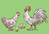 Sketches of a hen,cock and chickens