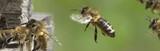 Am Bienenstock