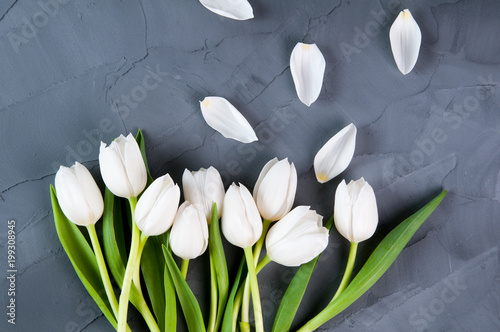 white tulips on a grey background - 199308945