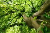 Beeindruckender Baum im weichen Licht