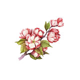Branch of cherry blossoms. Hand draw watercolor illustration. - 199322512