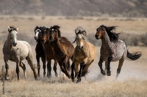 Plexiglas Paarden Wild Horses Running