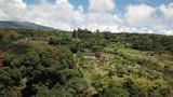 Tropical plantation and volcano aerial view Big Island Hawaii - 199339926