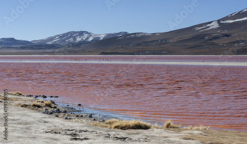 Fotobehang Lavendel The Red Lake, or Laguna Colorada, on the Altiplano near Uyuni inside Eduardo Avaroa National Reserve in Bolivia at 4300 m above sea level. The red color is caused by sediments and algae.